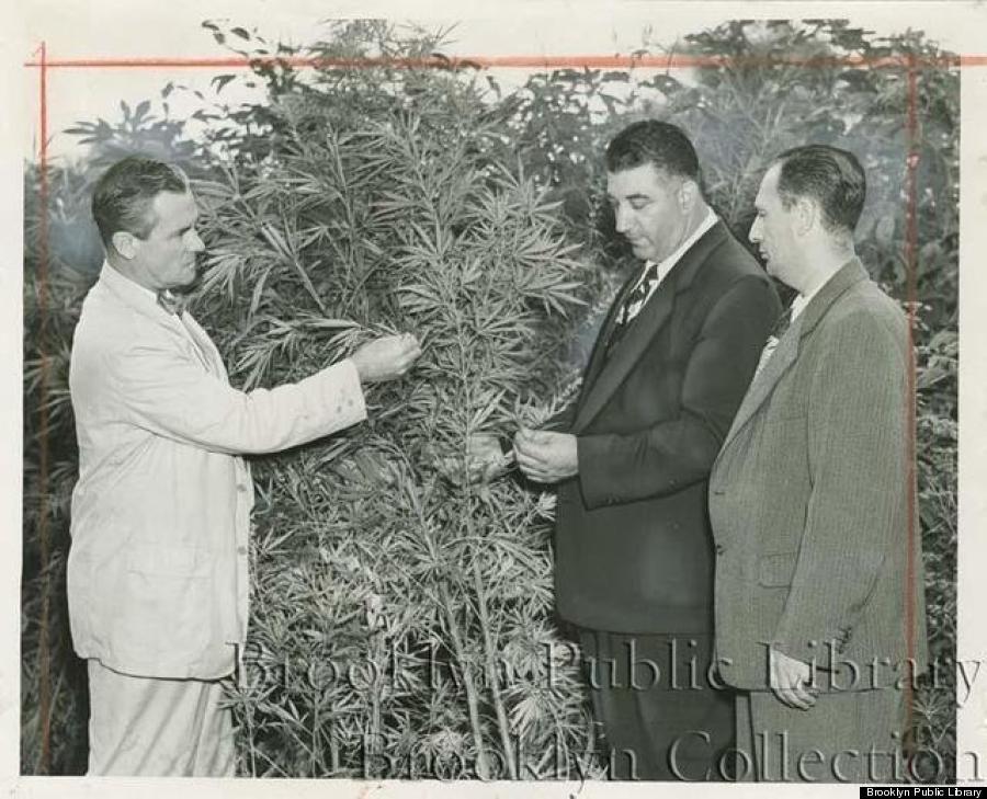 marijuana nyc