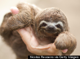 Where You Can Pet a Baby Sloth: Hidden Gems of Costa Rica