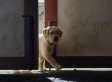 Budweiser's 'Puppy Love' Super Bowl Commercial 2014 Wins Our Hearts Again