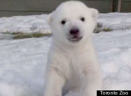 WATCH: Baby Polar Bear Sees Snow For The First Time
