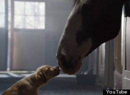 WATCH: Budweiser's 'Puppy Love' Ad Makes Us Feel All The Feels