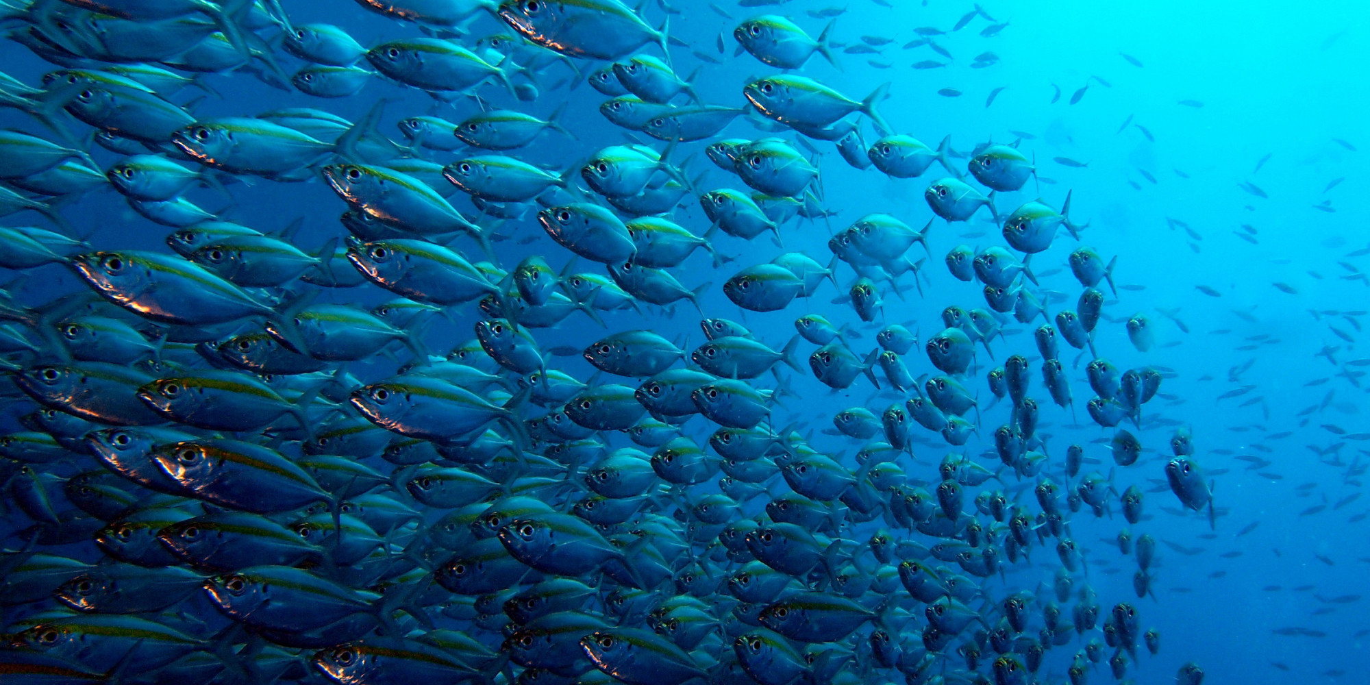 Bloomberg to help save the oceans and feed the world for Fish world on facebook