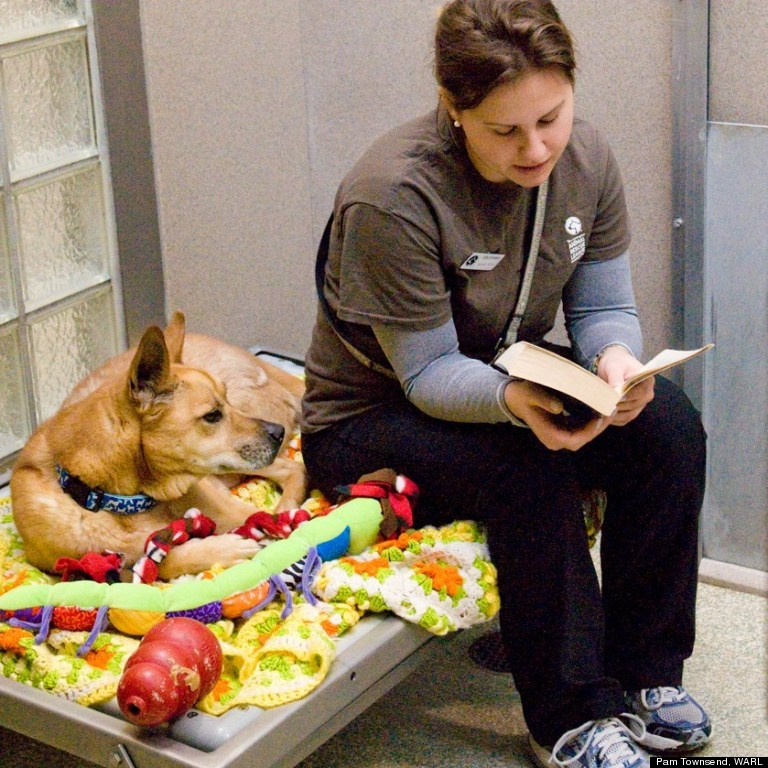 reading a book to a dog