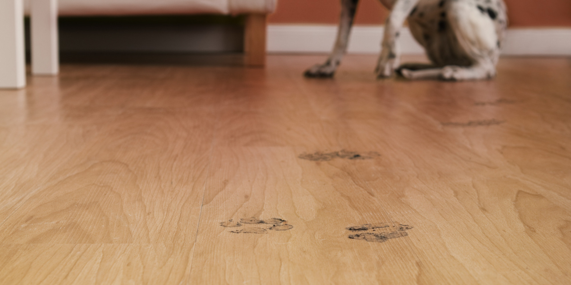 Dogs and hardwood floors 28 images dog proofing for Hardwood floors good for dogs
