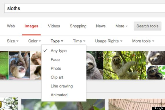 sloth image search