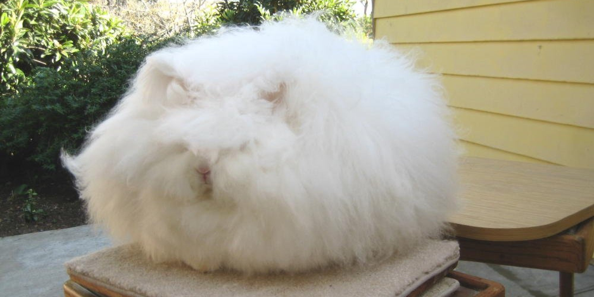 Underneath This Giant Ball Of Cotton Is A Rabbit Photos