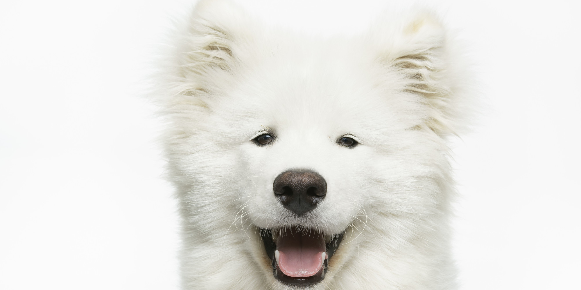 why dogs make better pets Nbc news better brings you wellness news and tips to make the most of your mind, your body and your life  and provides resources to care for the pet knowing their dog is ok allows people to .