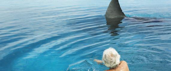 SHARK FINS SWIMMER