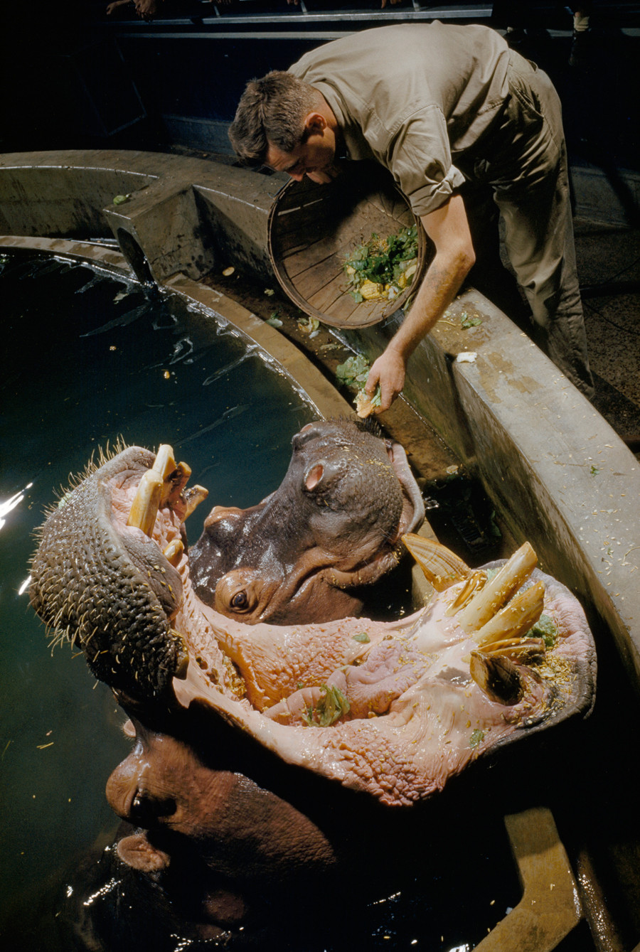 National geographic hippo and tortoise book