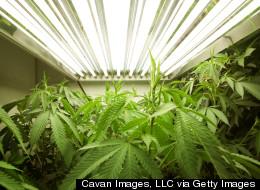 Marijuana Decriminalization Advances In Washington, D.C.