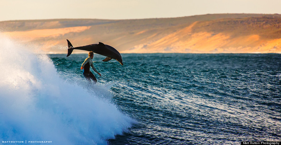 dolphin surfer