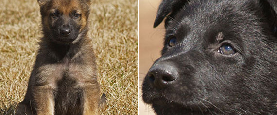 rcmp name the puppy contest