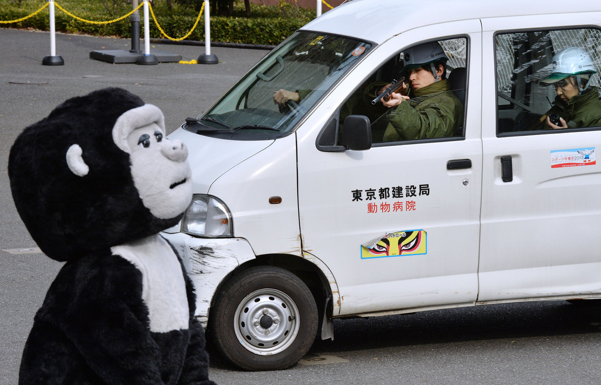 gorilla zoo escape
