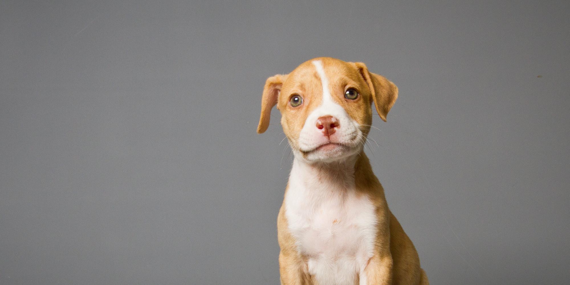 ... Breed-Specific Legislation, Making Everything Better For Pit Bulls
