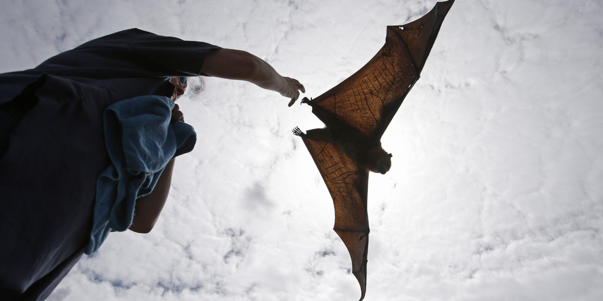 If You're Wondering What A Flying Fox Looks Like...
