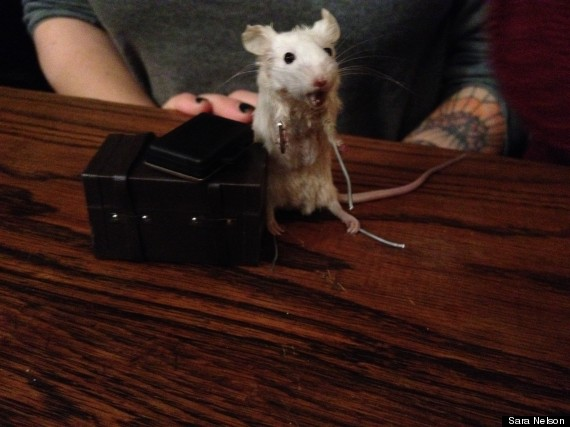 jess mouse taxidermy