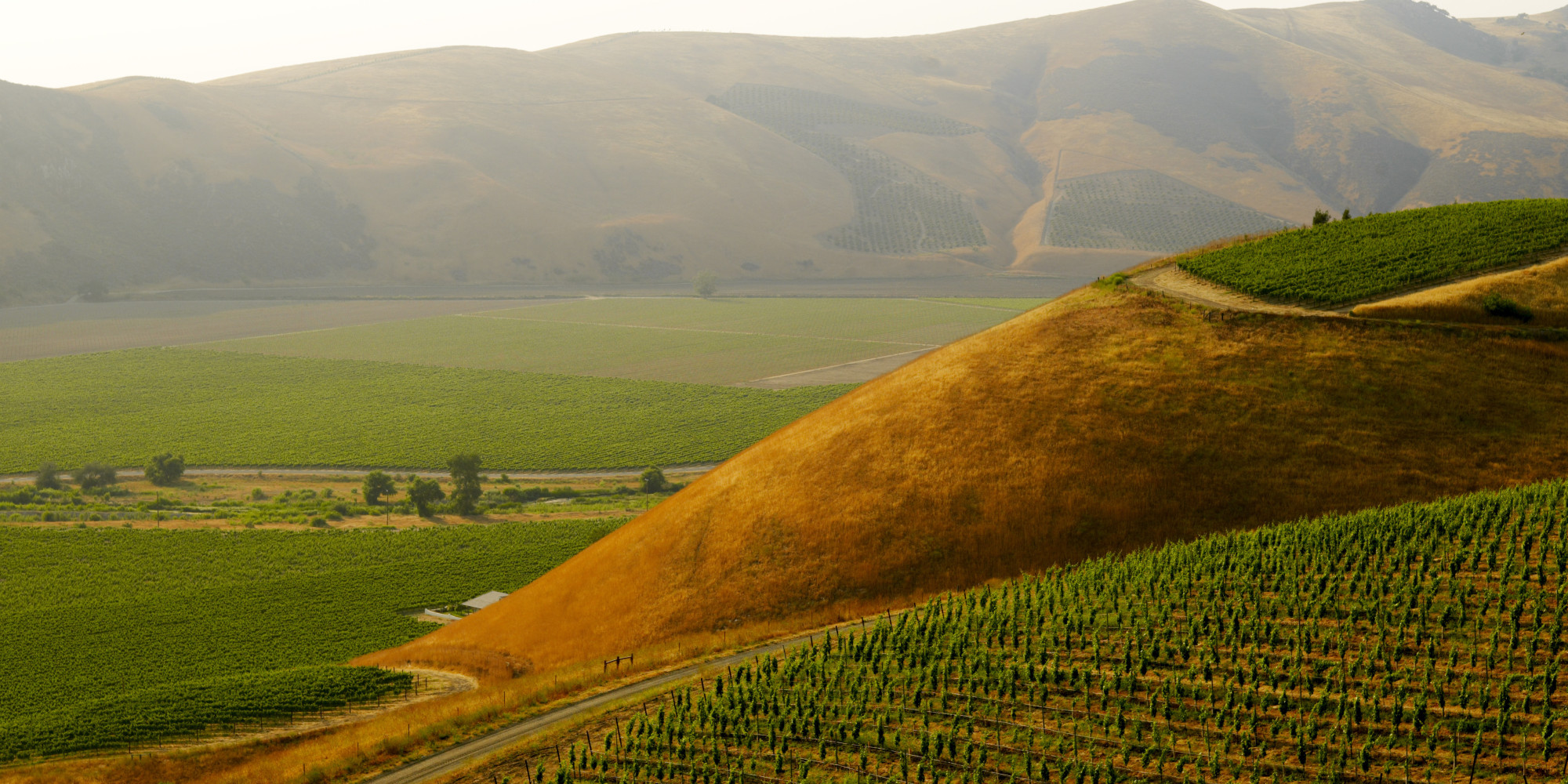 Will There Be Wine In California Without Water?