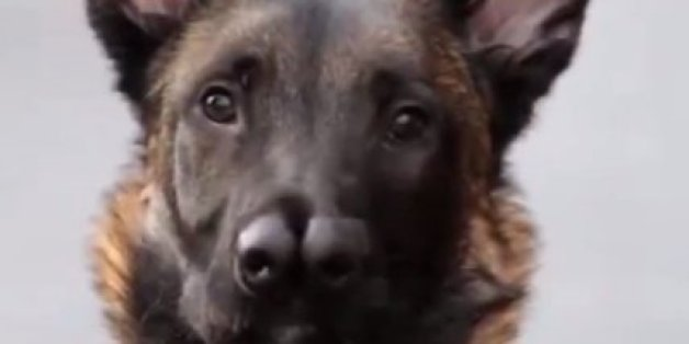 Snuffles The Dog With 2 Noses Sniffs Out New Home Huffpost