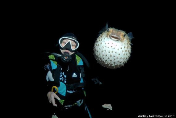 pufferfish photobomb