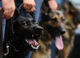 Naked Man With 'Large Clock' Shrugs Off Police Dog, Batons, Stun Gun In Florida: Cops