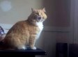 Skimbles The Cat Has Clearly Given Up On Life (VIDEO)