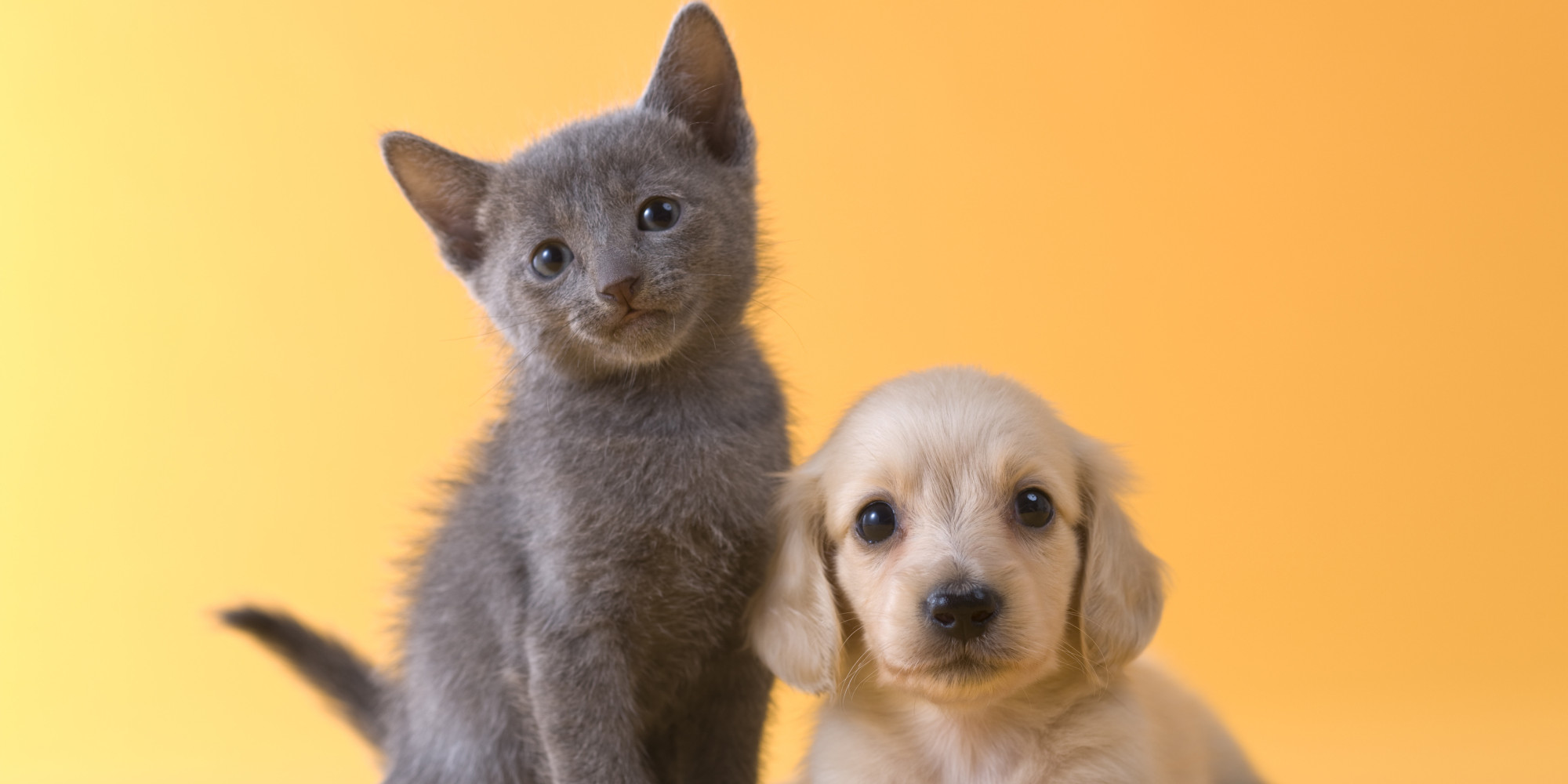 how to help kittens digest