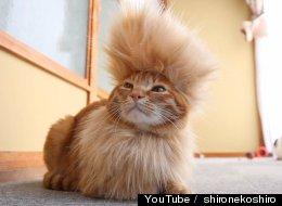 WATCH: Never Fear, Mohawk Cat Is Here