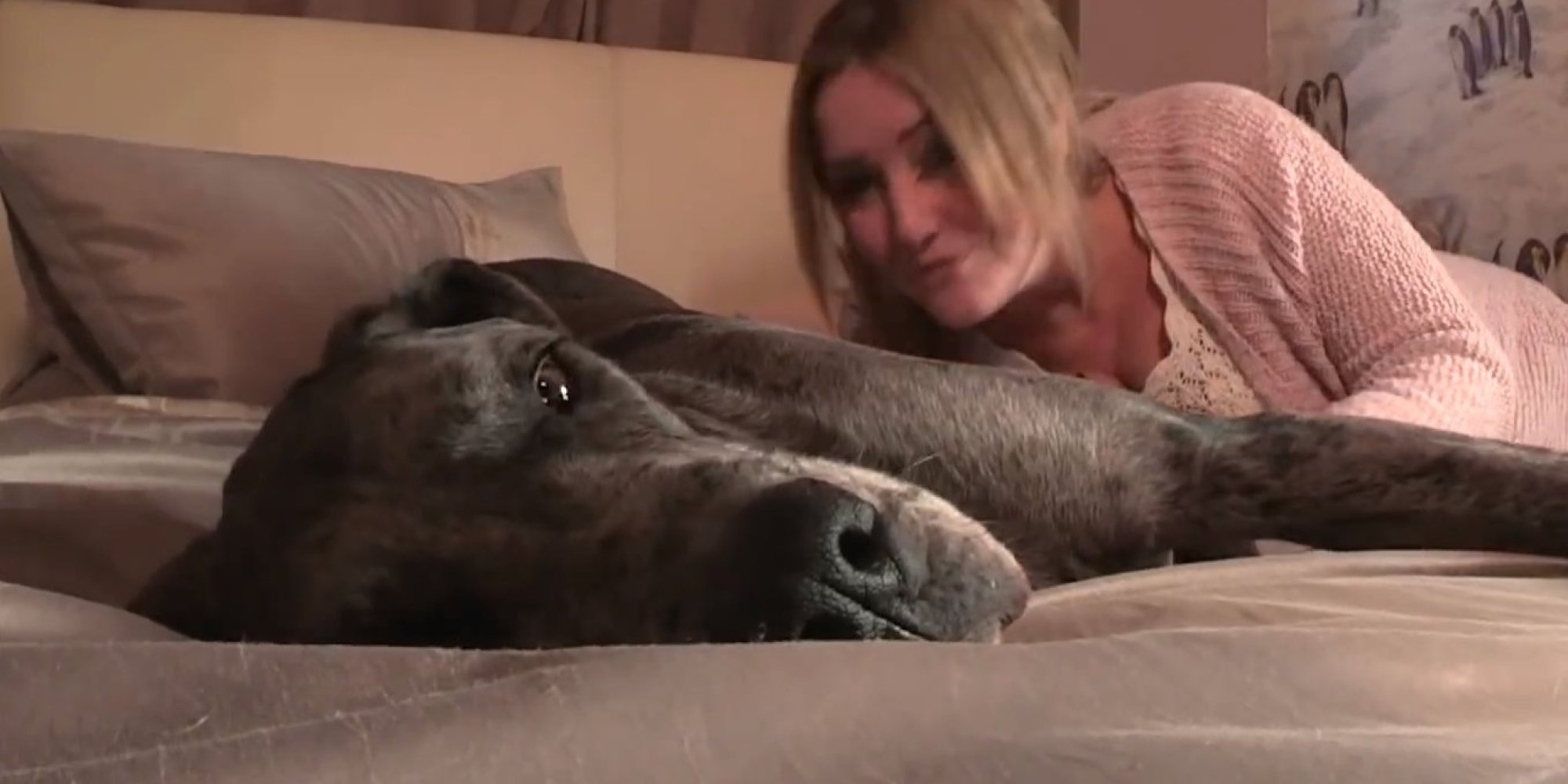 Great dane fucks woman