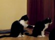 Cat Tries To Apologise To Other Cat (VIDEO)