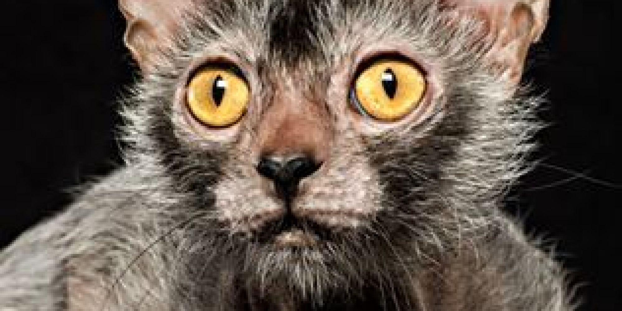 kitten scratch trump