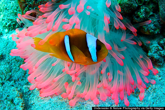 ocean underwater fish