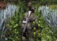 Mexico Considers Legalizing Marijuana