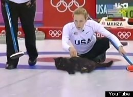 WATCH: Olympic Cat Curling!