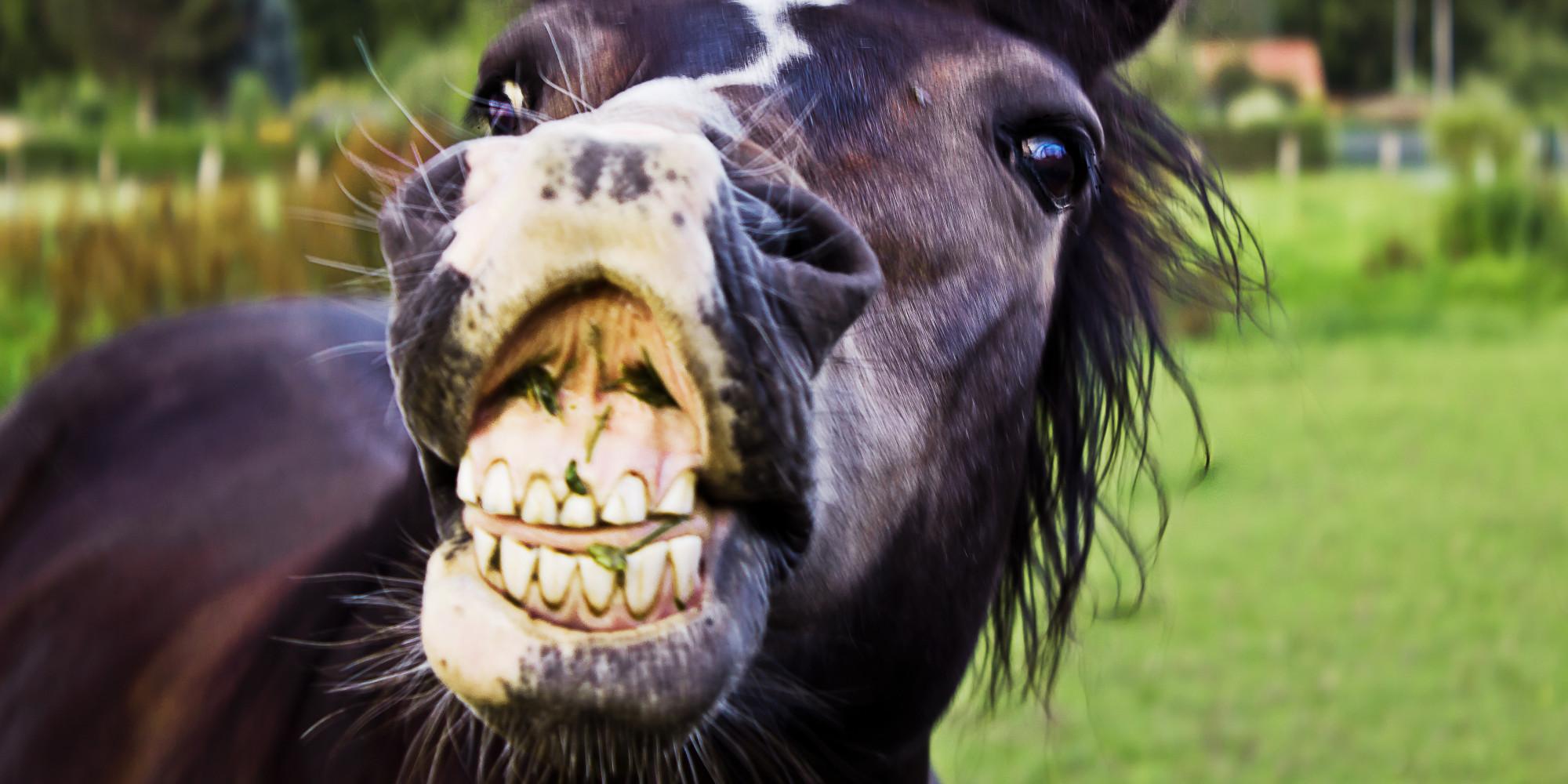 Horse viagra