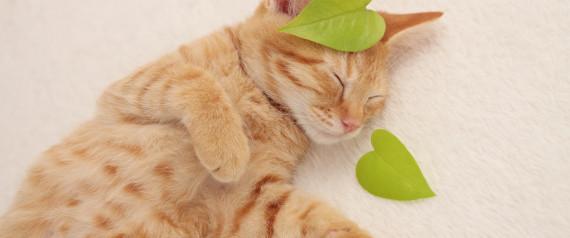 CATS HEARTS