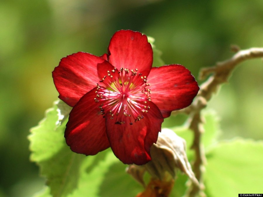 hawaii's flowers are as intricate and alluring as their names, Beautiful flower