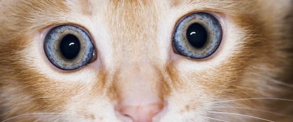CAT DOGS ULTRAVIOLET