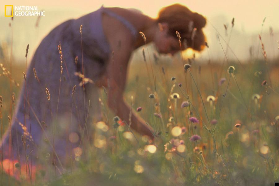 natgeoflowers