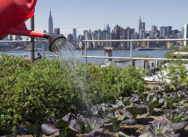 Agriculture urbaine ce dont elle est capable et ce qu 39 elle ne pourra j - Agriculture urbaine paris ...