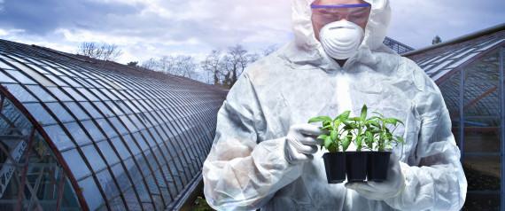 GMO SCIENTISTS