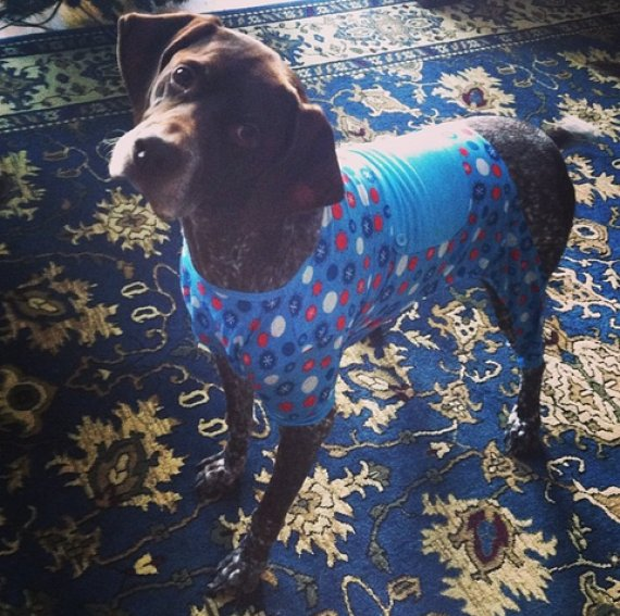 dog in pjs on a rug
