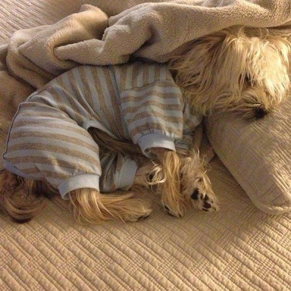 Dog Picture Pajamas