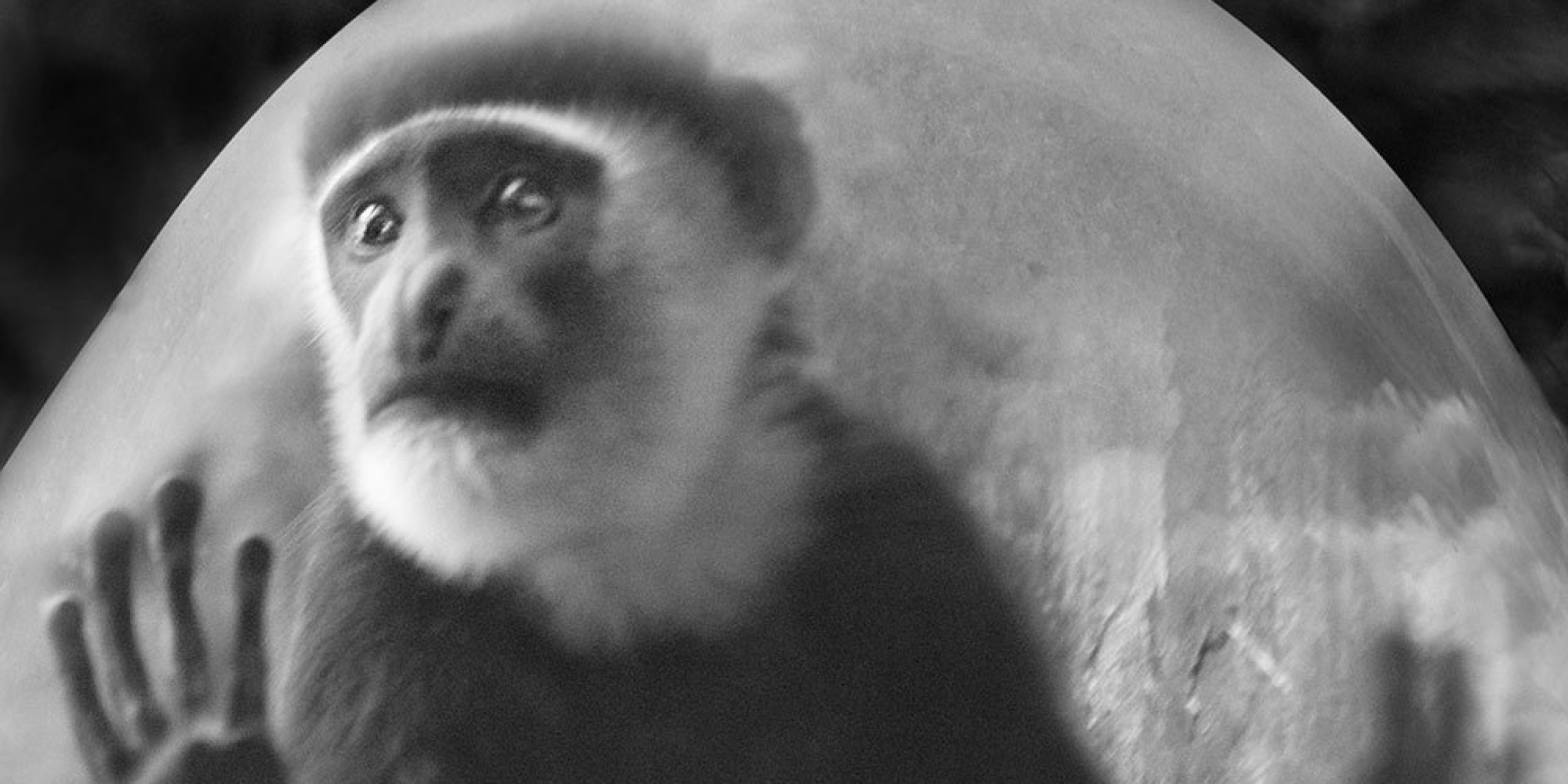 10 Touching Photos Of Monkeys In Captivity Will Bring Tears To Your Eyes