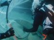 Sydney Divers Bravely Wrestle (And Rescue) Critically Endangered Shark (VIDEO)