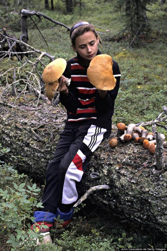 siberia mushroom