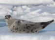 Pro-Seal Hunt Group To Receive Funds From Newfoundland And Labrador