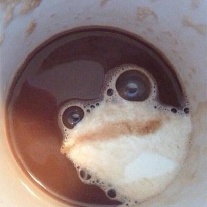 latte frog