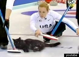 고양이 컬링이 올림픽 종목? (동영상)