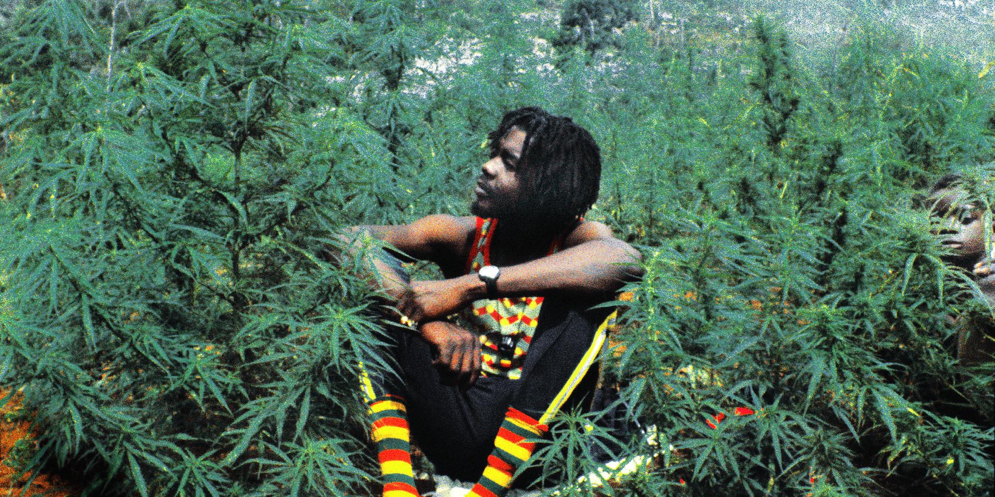 jamaica could decriminalize marijuana this year huffpost