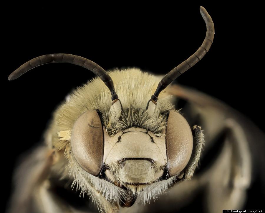 bee inventory